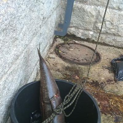 Wydobycie ryb 1