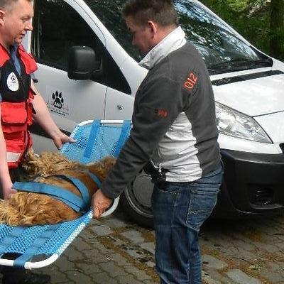 Transport żywych zwierząt 1