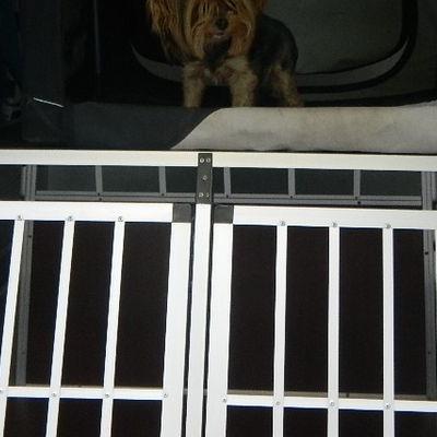Transport żywych zwierząt 5