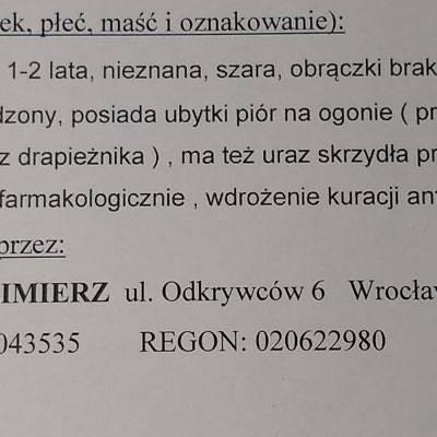 Labedz 2