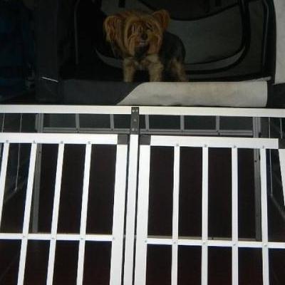 Pies w pojeździe